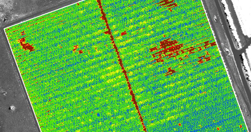 NDVI drone image for agriculture